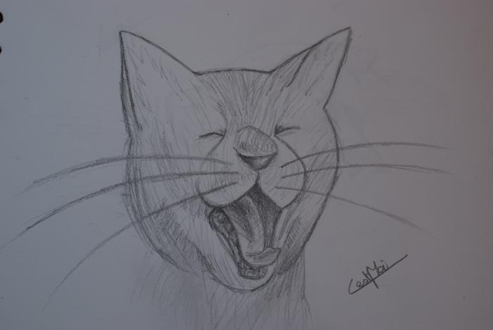 Mes dessins et autres ( Cestmoi ) Chat_q10