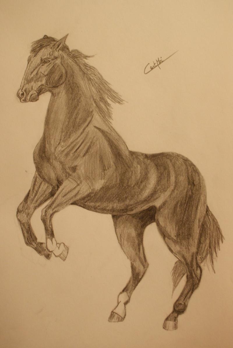 Mes dessins et autres ( Cestmoi ) Dsc09912