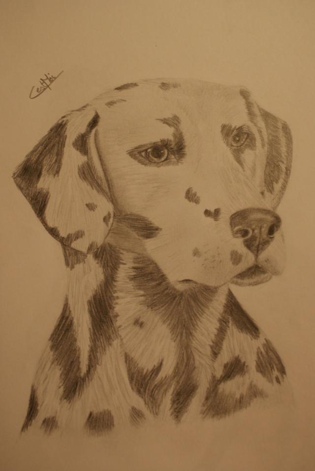 Mes dessins et autres ( Cestmoi ) Dsc09915