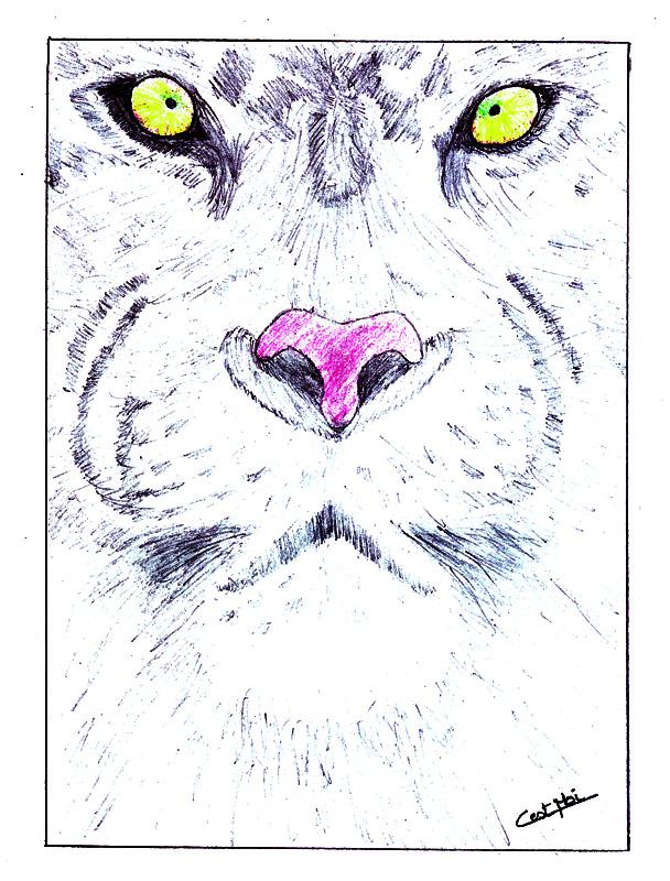 Mes dessins et autres ( Cestmoi ) Tigre10