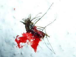 Ou est passé moustick????? Indexv10