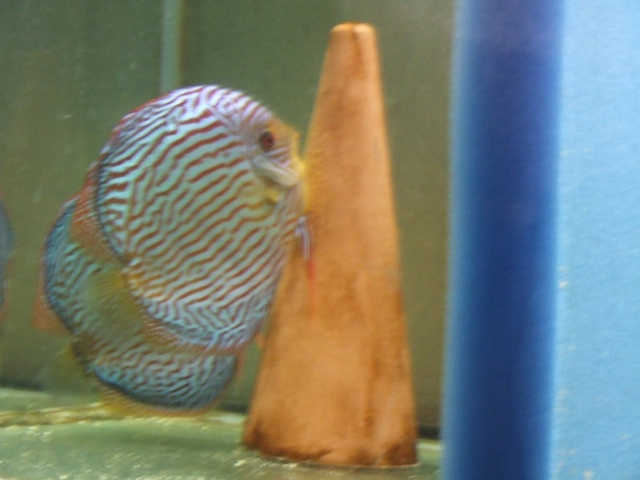 reproduction tr (turquoise rouge) piwowarsky Dscf5220