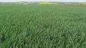 photo de mes blés   Photo_15