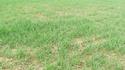 photo de mes blés   Photo_19