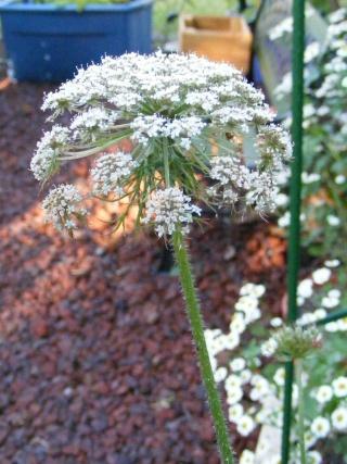 pretty sights found while walking thru the garden 07_20_19