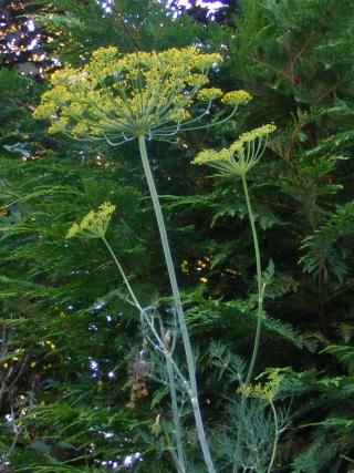 pretty sights found while walking thru the garden 07_20_21