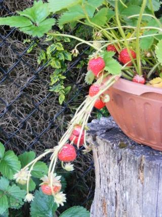 pretty sights found while walking thru the garden 07_20_22