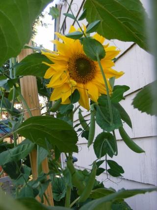 pretty sights found while walking thru the garden 07_20_23