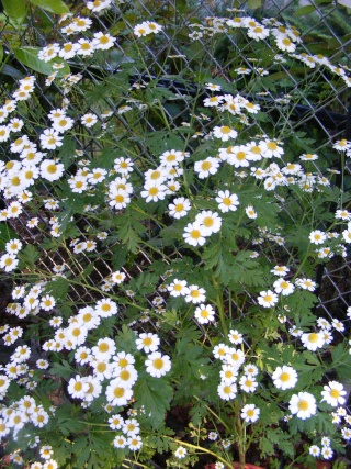 pretty sights found while walking thru the garden 07_20_26