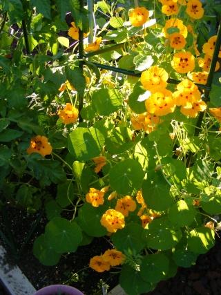 pretty sights found while walking thru the garden 07_20_27