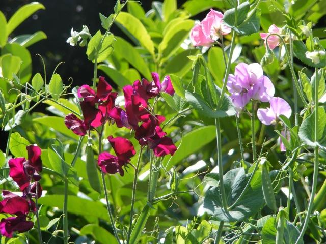 pretty sights found while walking thru the garden 07_29_17