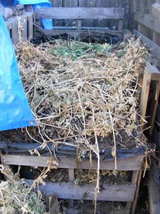 Monthly Avatar Theme For November: Compost! Dscf0181