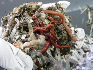 Monthly Avatar Theme For November: Compost! Dscf0184