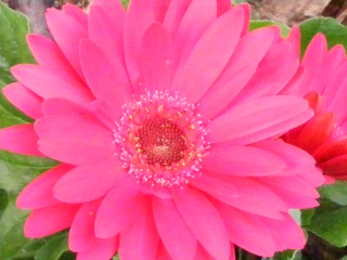 Monthly Avatar Theme for May: May Flowers - Page 2 Dscf0630