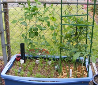 Tomato Tuesday 2015 Dscf0810