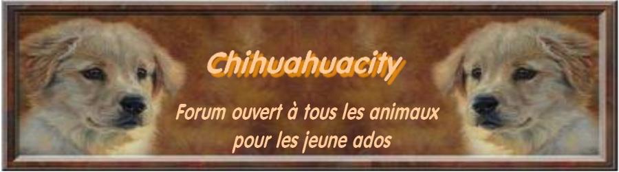 chihuahuacity