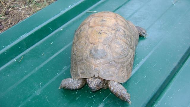 identification tortue 03610