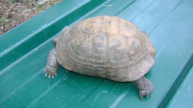 identification tortue 03710
