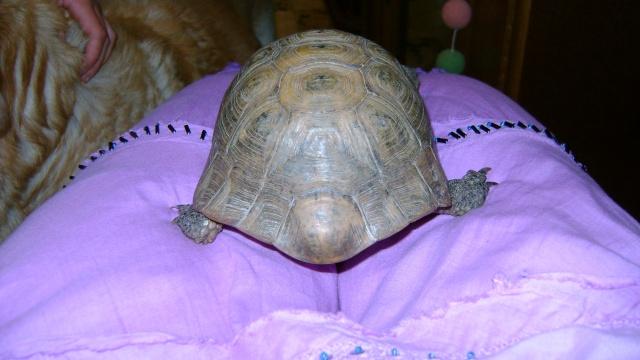 identification tortue 04010