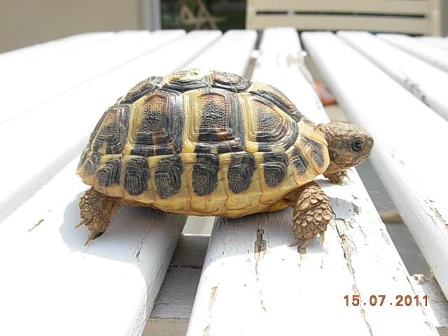 l'arrivée de mes tortues Dida212
