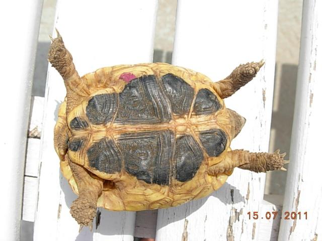 l'arrivée de mes tortues Dida3_11