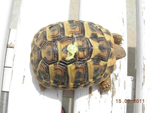 l'arrivée de mes tortues Dida5_11