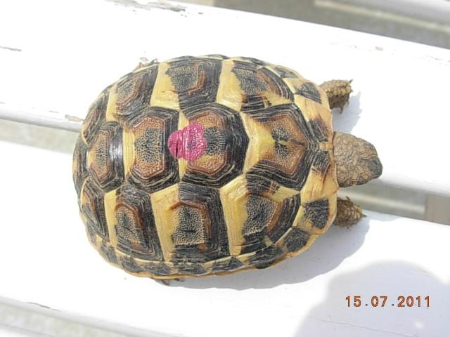 l'arrivée de mes tortues Flossi10