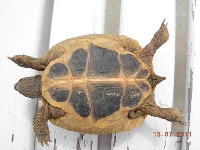 l'arrivée de mes tortues Lolott12