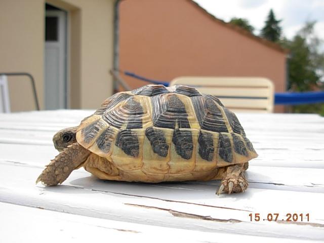 l'arrivée de mes tortues Zotti210