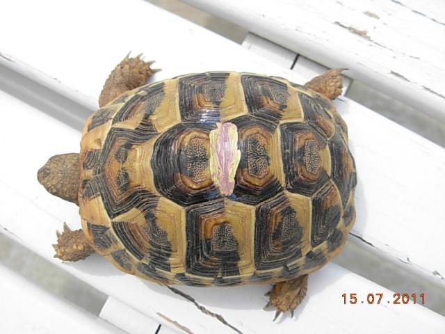 l'arrivée de mes tortues Zotti810