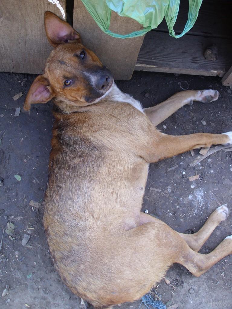 Avant / Après : Comment un animal peut devenir beau grâce à l'amour Daama10