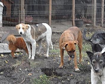 IAGOO FILS DE GEORGICA ET D'ANOUSHKA, né le 20 Aout 2010, parrainé par Babsu -SC-LBC- R- SOS -  Refuge11