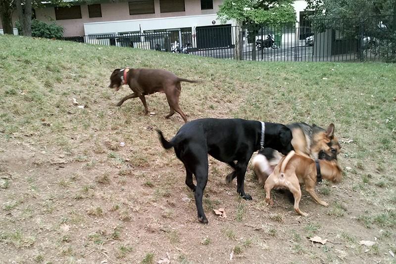 Mon chien à Paris Kass1010