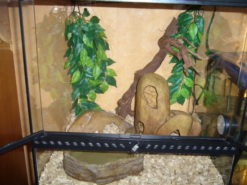 Terrarium provisoire pour python  P1080633