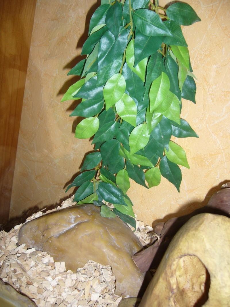 Terrarium provisoire pour python  P1080635
