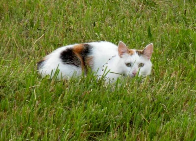 Кошатинские - Страница 5 Cat-sm10