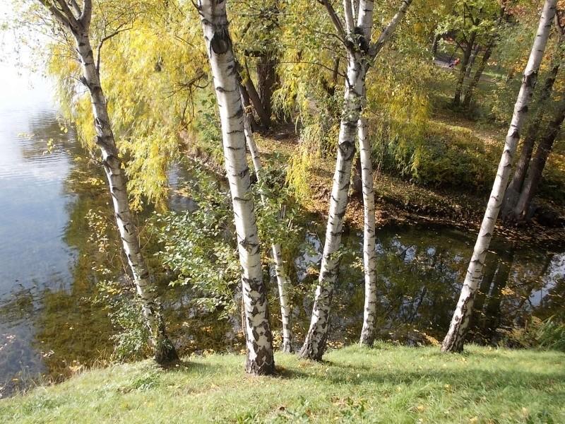 Золотая осень Dscn1911