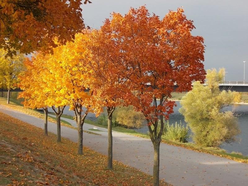 Золотая осень Dscn1913