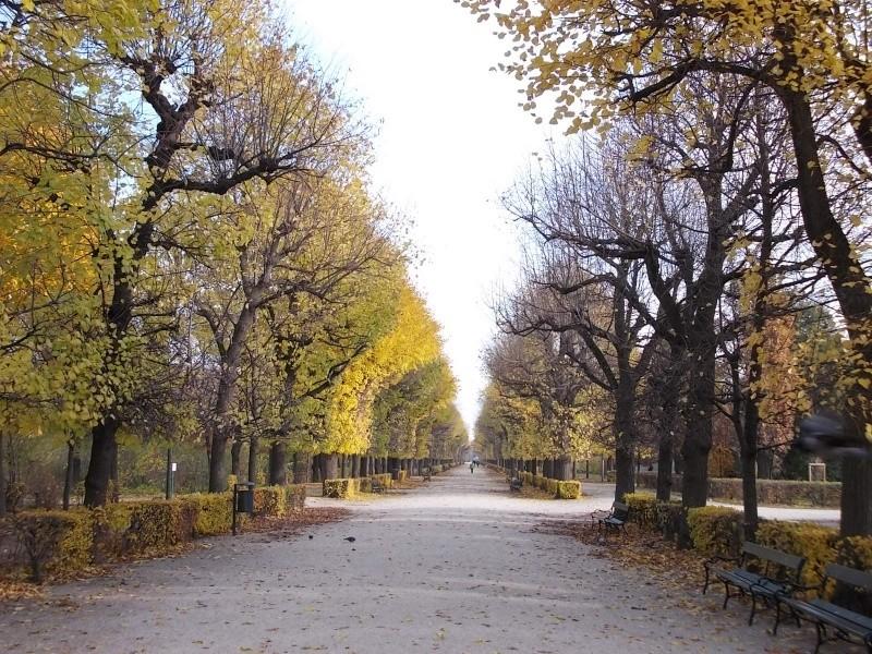 Золотая осень Dscn3212