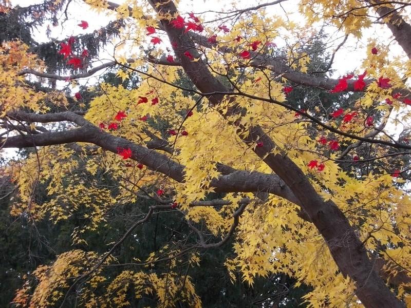 Золотая осень Dscn3214