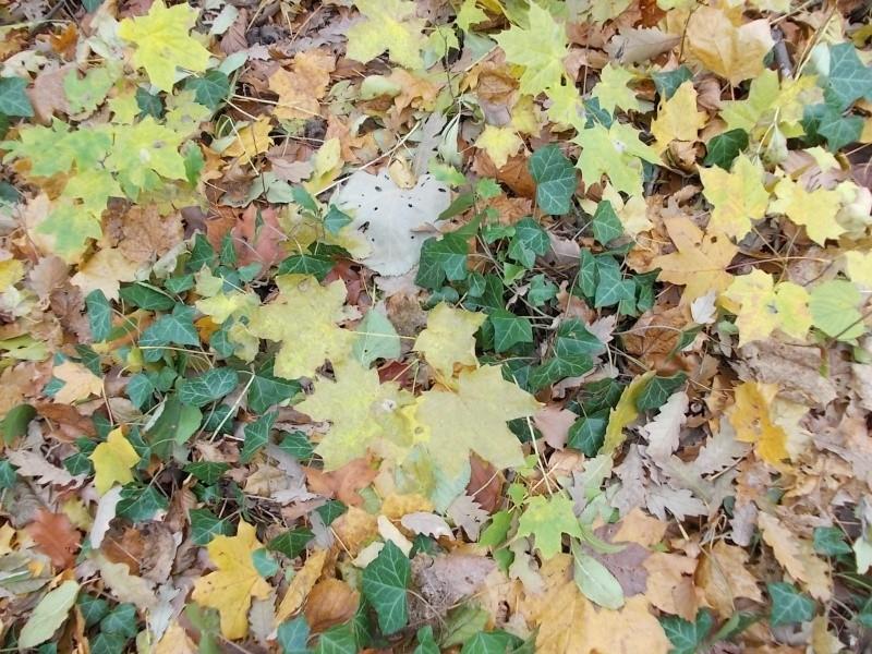 Золотая осень Dscn3215