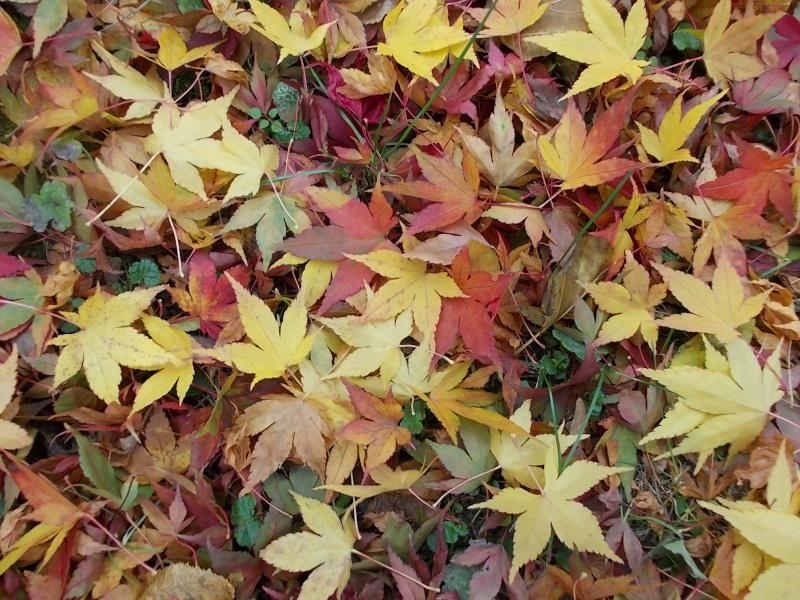 Золотая осень Dscn3216