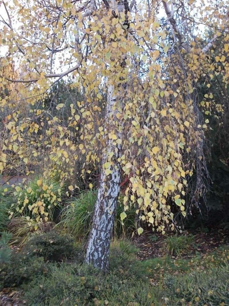 Золотая осень Dscn3220