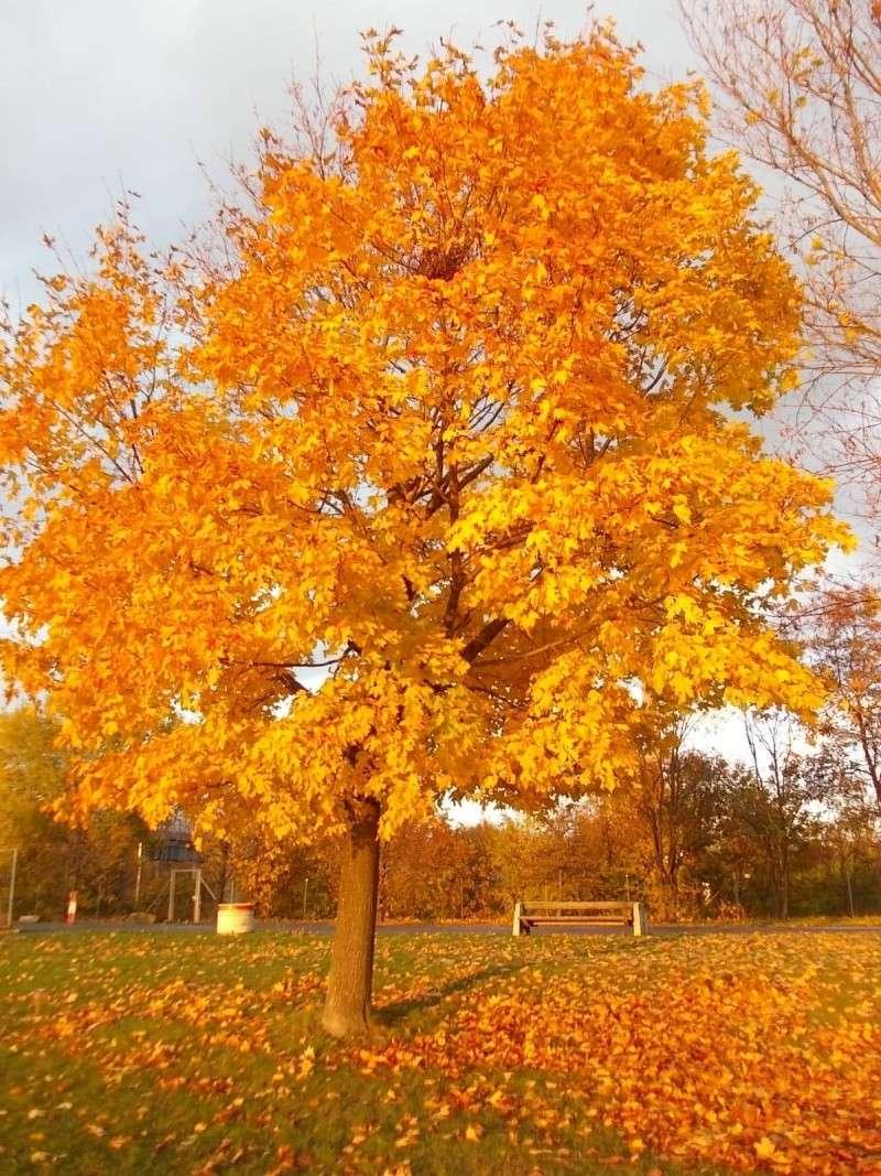 Золотая осень Dscn3222