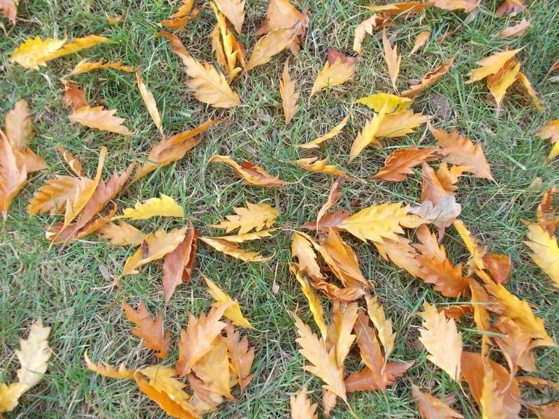 Золотая осень Dscn3310