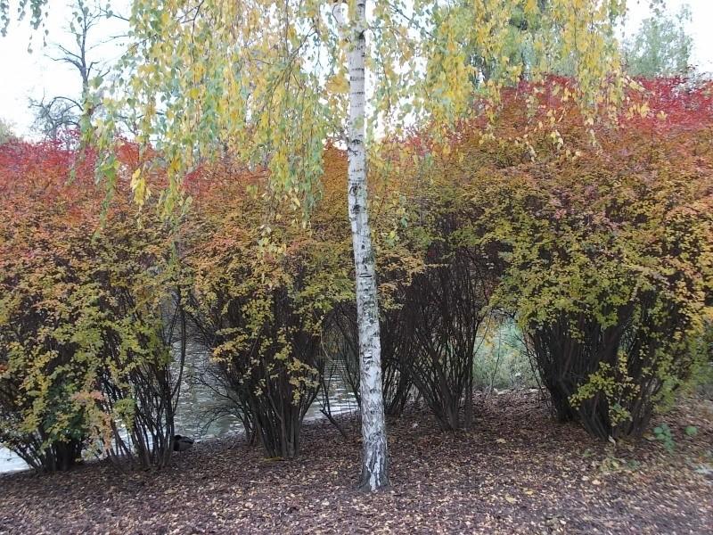 Золотая осень Dscn3311