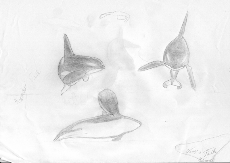 (dessin) dessin d'orque Orque011