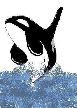 Dessine-moi une orque je te dirais qui tu es - Page 2 Orque_13