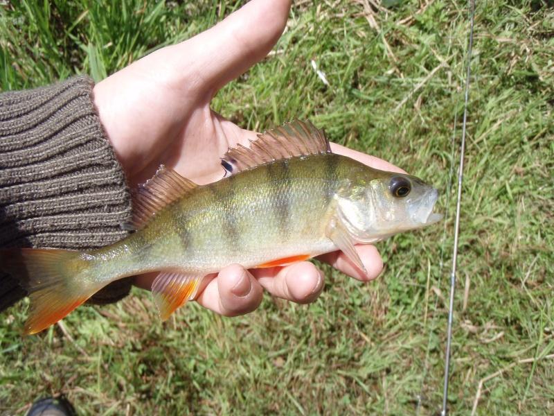 Creuse, le site des étangs de la Naute et Malleteix juillet 2012 P7150011
