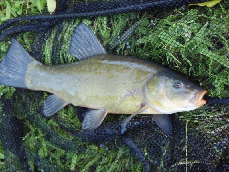 Creuse, le site des étangs de la Naute et Malleteix juillet 2012 P7180010